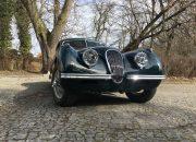 jaguar z przodu